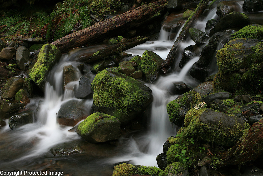 Moss-laden boulders are wrapped in running water and decaying logs along the fern lined cascades above the Pacific Ocean.