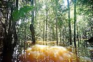 THE AMAZONIA