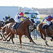 Lingfield 10th December 2012