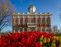 The red and yellow tulips bloom in front of the old Salt Lake City, Utah Council Hall building across from the State Capitol.