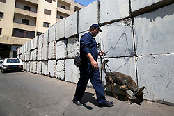 A policeman guides a police dog to look for undiscovered bombs near the presidential palace in Cairo, Egypt, June 30, 2014. Two police officers were killed and several other security personnel were wounded in two blasts near the presidential palace in Cairo. No group has yet claimed responsibility for the attacks. EXPA Pictures © 2014, PhotoCredit: EXPA/ Photoshot/ Cui Xinyu<br /> <br /> *****ATTENTION - for AUT, SLO, CRO, SRB, BIH, MAZ only*****