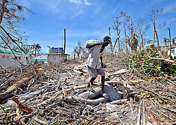 An elderly man navigates the downed trees along the storm battered beach in Port Salut, Haiti, on October 11, 2016. Photo by Patrick Farrell/Miami Herald/TNS/ABACAPRESS.COM