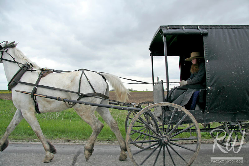 Amish Carriage, Harmony, Minnesota