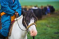 Mongolie, Province de Ovorkhangai, Vallee de l'Orkhon, campement nomade, cavalier mongol // Mongolia, Ovorkhangai province, Orkhon valley, Nomad camp, Mongolian horserider