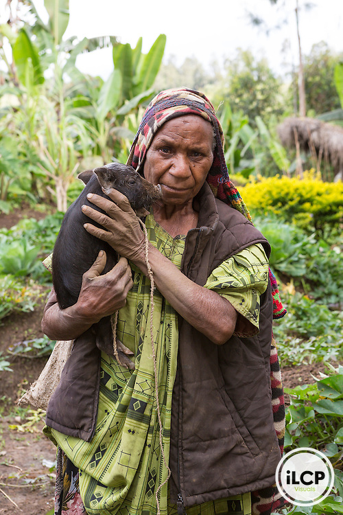 Woman and a piglet in her garden.  Highland Territory, Enga Province, Papua New Guinea