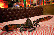 "A live lobster awaits it's fate at the East Boat Lobster Restaurant in New York. A Chinese restaurant in Little Italy in the genre of ""Soy Sauce Western,"" an Asian twist on European and"