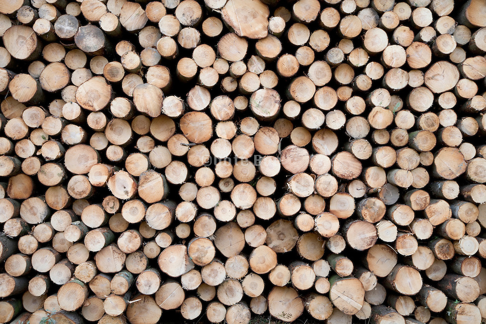 large pile of cut and stacked pinewood
