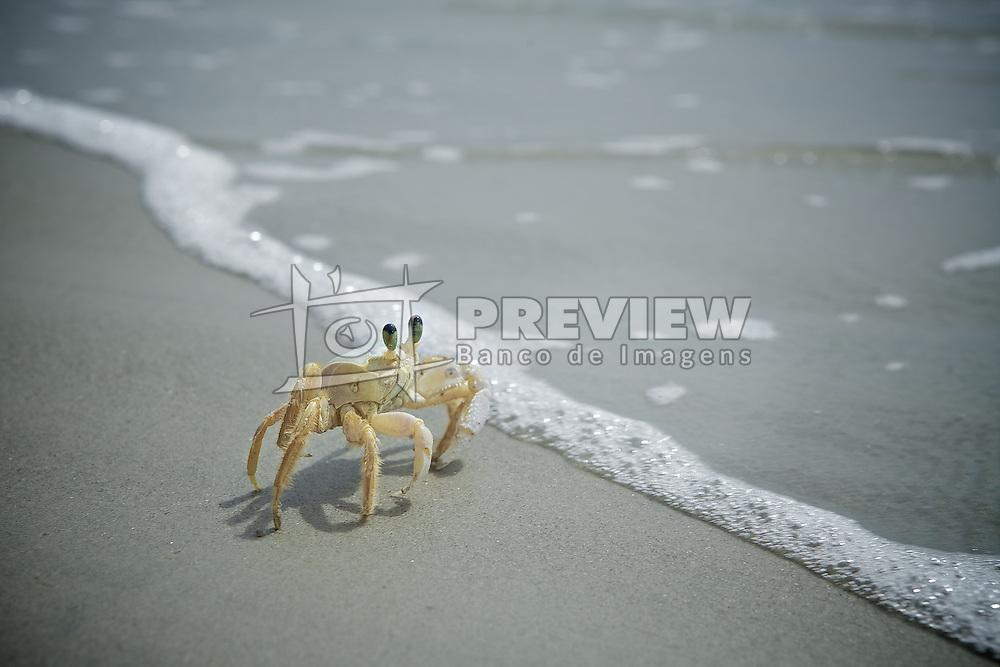 .  FOTO: Jefferson Bernardes/Preview.com