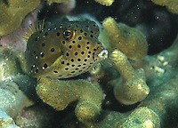 Guam's Marine Preserves, Hidden Treasures<br /> Book by Tim Rock