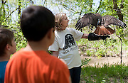 Children gather around Kathy Copus of the Blackland Prairie Raptor Center and her red-tailed hawk during EarthFest 2013 at the Connemara Meadow Preserve in Allen on Saturday, April 6, 2013. (Cooper Neill/The Dallas Morning News)