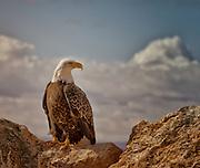 Sitting on the rocks on Antelope Island, Utah