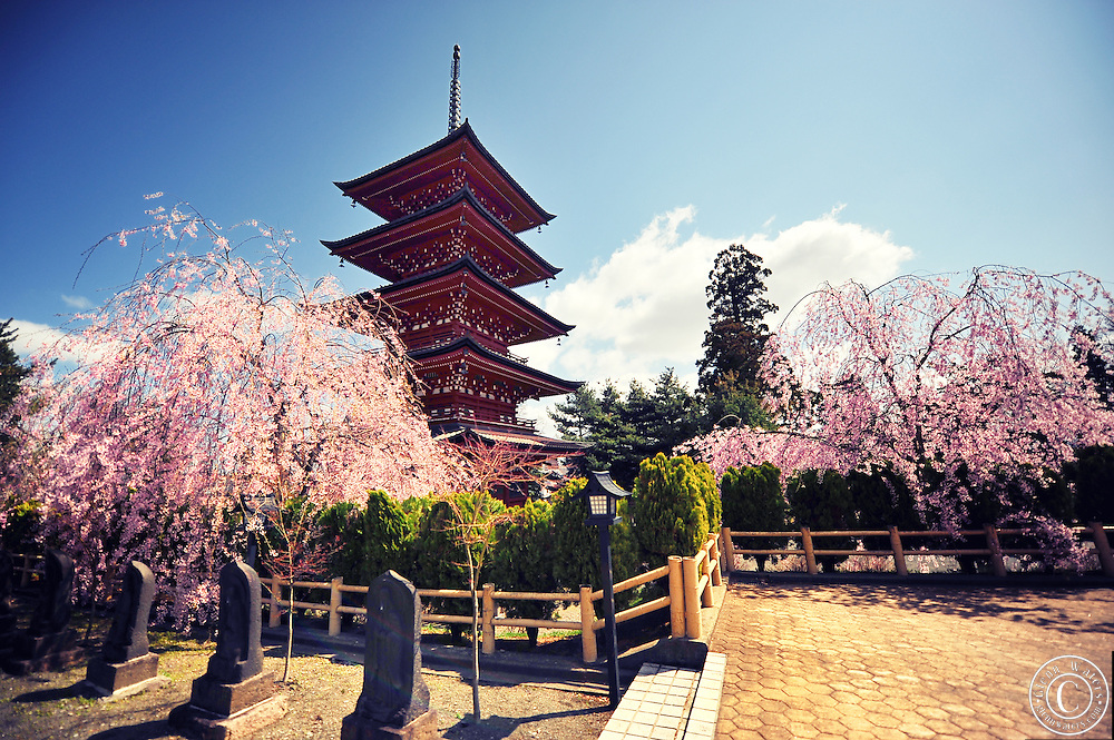 A japanese five storied pagoda located in Hirosaki northern Japan. It is spring time and surrounded with beautiful cherry blossoms and buddhist statues.