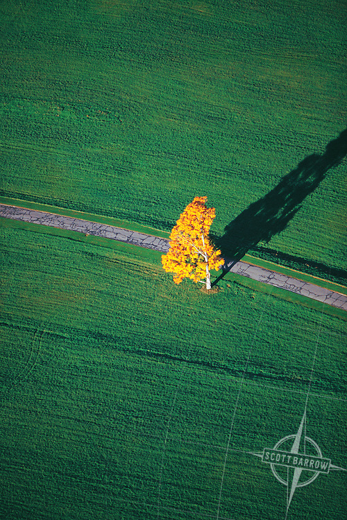 Yellow autumn tree in green field by road from the air..