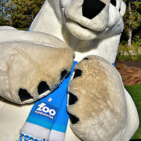 Winston the Assiniboine Park Zoo Mascot in Winnipeg, Canada <br /> Kids love going to the Assiniboine Park Zoo in Winnipeg.  Often after passing through the turnstile they are greeted by Winston, the zoo's lovable mascot. What better way to start your day than with a photo op while getting a polar bear hug.  He was introduced during the summer of 2014 when the new Journey to Churchill section was opened.