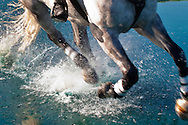 Eventing, Cross Country, Horse running across pond