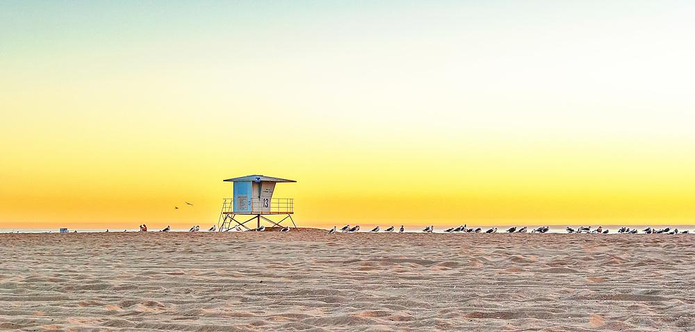 Seagull on Huntington Beach<br /> California, USA
