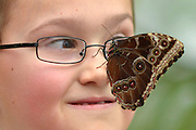"© Licensed to London News Pictures. 25/03/2013. London, UK. Harry Brown aged 7 looks at butterflies that have settled on his face.  Children play with butterflies at the Natural History Museum's new exhibition ""Sensational Butterflies"" which runs from 29th March to 15th September 2013.   The exhibition features over 500 tropical butterflies  and a chance to watch butterflies emerge from chrysalises trough a hatchery window. Photo credit : Stephen Simpson/LNP"