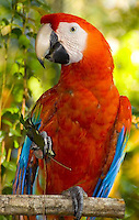 Belize, Central America 2<br /> <br /> Eco-Tourism, Diving and Islands