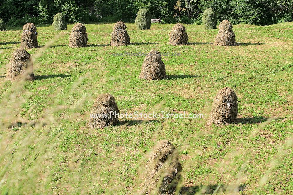 Slovakia, Banska Bystrica region,farm
