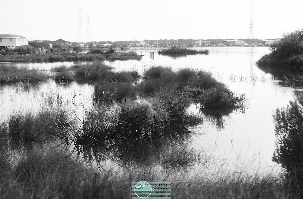 1979-6-Seabrook Back Bay with marsh grass