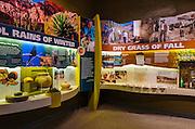 Visitor center interpretive display, Organ Pipe Cactus National Monument, Arizona USA