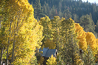 Scenic image of Sorenson's Resort in aspens in fall.Hope Valley, CA