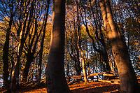 First sunlight in old growth Common beech (Fagus sylvatica) forest. Mehedinti Plateau Geopark, Geoparcul Platoul Mehedinți, Romania.