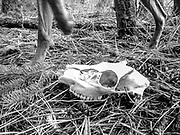 Sugar's legs and small deer skull