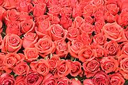 Red Roses on Rose Float, Pasadena, California - 2008