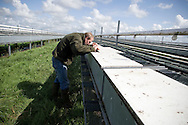 A member of staff at Hy-Fly Hatcheries, a company based in Preesall, near Blackpool, Lancashire which specialises in breeding partridge and pheasant to be sold to sporting estates, pictured checking raised cage laying units containing partridges. The partridges are kept in small cages for up to three years while they mature before being sold. Pheasants are also kept in cages but are transferred to outdoor pens as they mature. The company, which is owned by Ray Holden, produces around three million day-old chicks per year.