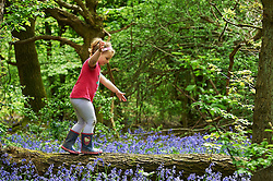 © Licensed to London News Pictures. 04/05/2015 London, UK. Elsa Stamp, 5 crosses a fallen log amongst the bluebells at Bentley Priory Nature Reserve, Stanmore, north west London in the May Day Spring Bank Holiday sunshine. Photo credit : Simon Jacobs/LNP