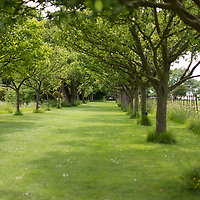Helmingham Hall gardens in Suffolk England. Apple Walk