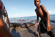 Children stare at two pilot whales caught out at sea by a harpooner. The Indonesian village of Lamalera has hunted whales, sharks and dolphins for the last 500 years. Their method is to leap from a small wooden boat with a long harpoon made of bamboo and spear the animal. Once brought to shore the animal is divided in to parts and distributed to the community, partly for consumption and partly for exchanging with other inland communities for corn and rice..On the 21 May 2009 at the World Oceans Conference, the Indonesian government officially declared 3.5 million hectares of critical marine habitat in the Savu Sea for conservation. Though government representatives have assured that traditional whaling -- which has been supporting the surrounding communities' means of living -- will not be banned in the area immediately outside the zone, concerns still remain. Lamalera is one of the last remaining Indonesian whaling communities and is categorized by the International Whaling Commission as aboriginal whaling..