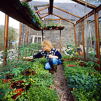 lady gardener tending young plants in greenhouse with tomatoes