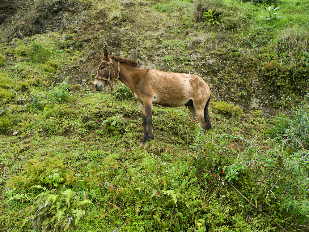 A horse on a mountainside. Horses, mules and donkeys provide transportation for many in rural Haiti.