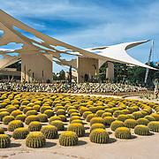 Cactimundo. San Jose del Cabo, Mexico.