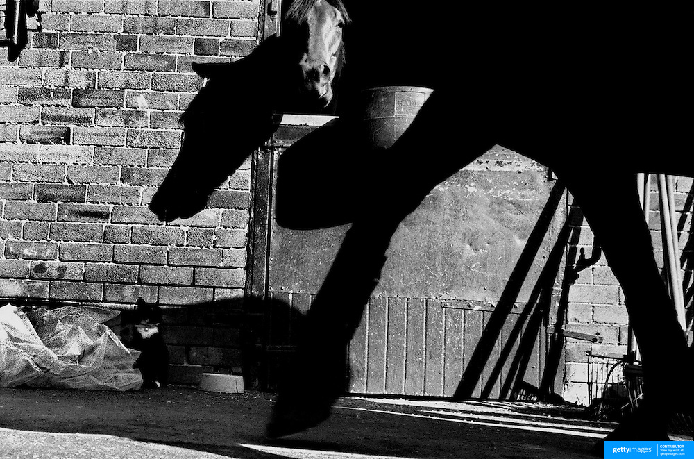 Horse and shadows at Randwick race course stables, Sydney Australia
