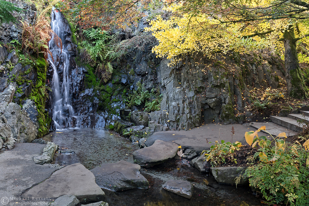 Gingko biloba and Japanese Maple (Acer japonica) trees provide some fall leaf color near the waterfall in the Quarry Gardens.  Photographed at Queen Elizabeth Park in Vancouver, British Collumbia, Canada.
