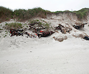 Wrecks of cars dumped and covered by sand dunes, Barra, Outer Hebrides, Scotland, UK