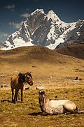 Horses under Jirishanca peak, 6094 metres, Cordillera Huayhuash, Andes mountains, Peru