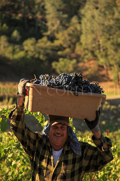 2013 Harvest at Brown Estate
