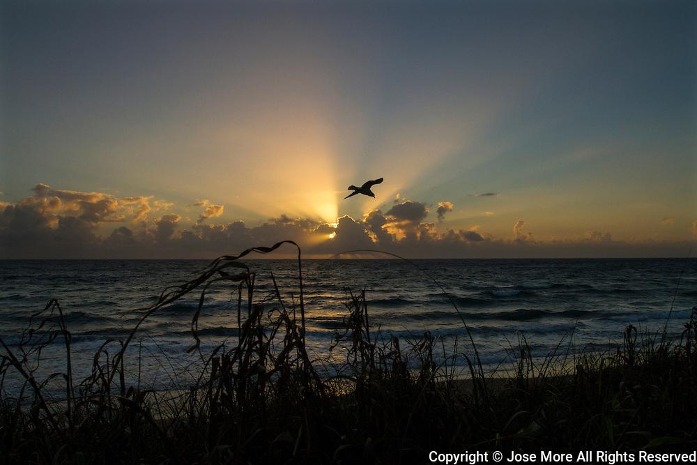 A Florida seagull at sunrise along Lantana Beach near Palm Beach, Florida.<br /> Photography by Jose More