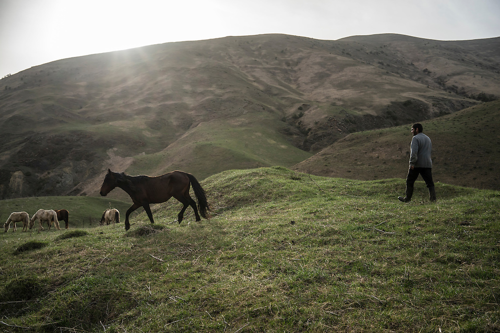 VANK, NAGORNO-KARABAKH - APRIL 22: A herd of horses, the brown ones of which are Karabakh horses, a breed originally developed in the region which is now faced with extinction, are let out to pasture by Gevorg Akulyan, 24, on a farm in the mountains on April 22, 2015 near Vank, Nagorno-Karabakh. Since signing a ceasefire in a war with Azerbaijan in 1994, Nagorno-Karabakh, officially part of Azerbaijan, has functioned as a self-declared independent republic and de facto part of Armenia, with hostilities along the line of contact between Nagorno-Karabakh and Azerbaijan occasionally flaring up and causing casualties. (Photo by Brendan Hoffman/Getty Images) *** Local Caption *** Gevorg Akulyan