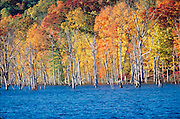 Fall trees by lake