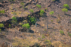 A burnt hillside in Leadline Creek.
