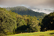 Morning mist rises in the Blue Ridge mountains of western North Carolina.