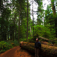 Biologist enjoys the serenity in temperate rain forest, Vanvouver Island, Vancouver