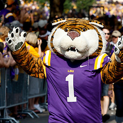 Sep 18, 2010; Baton Rouge, LA, USA;  LSU Tigers mascot Mike the Tiger  marches down Victory Hill prior to a game against the Mississippi State Bulldogs at Tiger Stadium.  Mandatory Credit: Derick E. Hingle