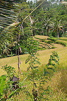 Balinese field temple in a rice paddy near ubud, bali, indonesia