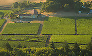 Aerial view over Cristom estate vineyards, Louise Vineyard, Eola-Amity Hills, Willamette Valley, Oregon